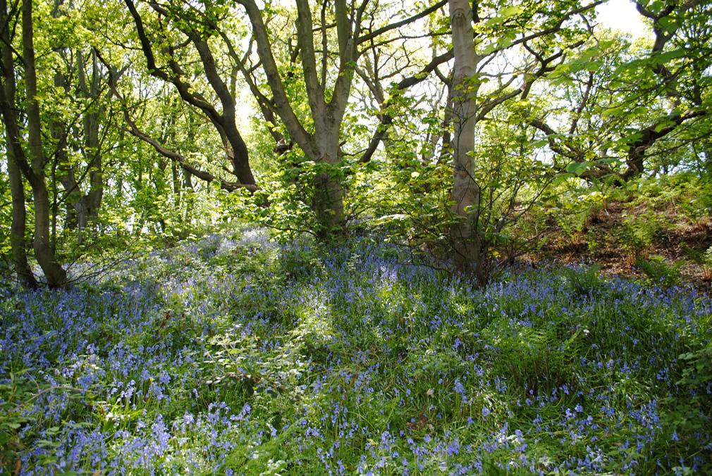 blue_bell_wood_prestatyn-cottage